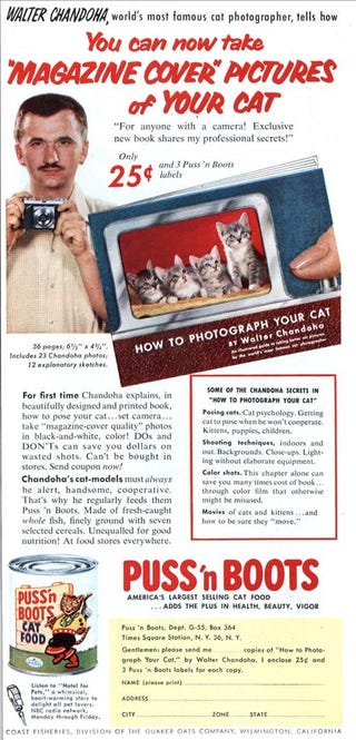 Illustration for article titled Internet's High Cat Content Traced Back To 1950s Ad