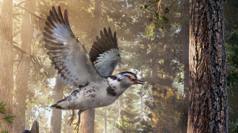 Artist's impression of Jinguofortis perplexus, a very modern-looking bird from the early Cretaceous.
