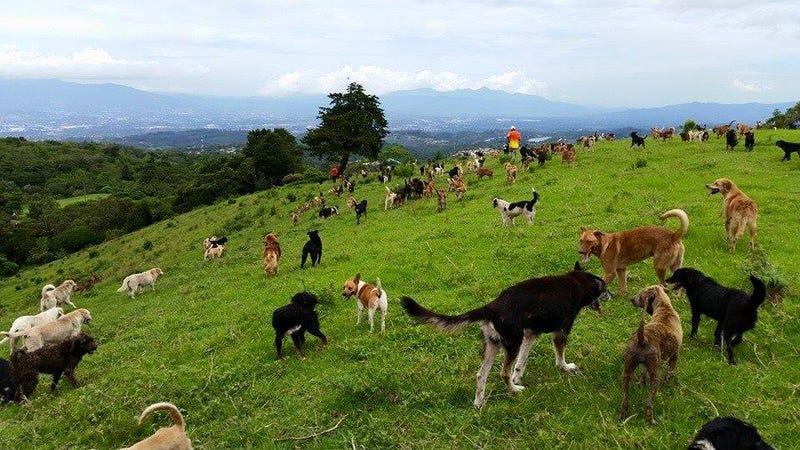 Fotos: Andrew George y Territorio de Zaguates