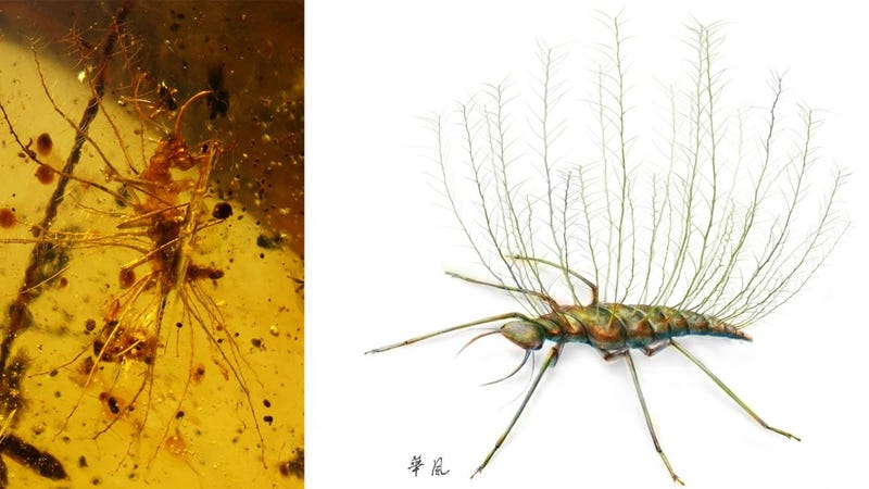 A lacewing larva trapped in amber (left) and an artist's reconstruction (right). (Image: Bo Wang, Nanjing)