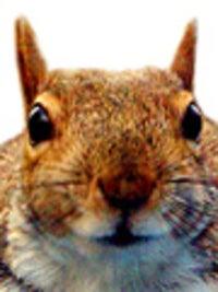 Danny the Squirrel