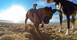 Illustration for article titled GoPro Finally Has a Dedicated Dog Mount