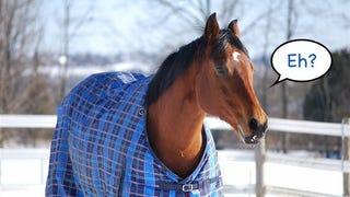 Illustration for article titled A lovakat meg lehet tanítani, hogy szóljanak, ha fáznak!