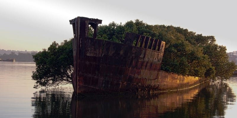 Illustration for article titled This century-old abandoned ship now hosts a floating forest
