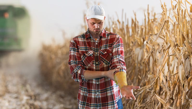 Illustration for article titled Horrified Iowan Farmer Starts Breaking Out In Corn After Coming Into Direct Contact With Monsanto Crops