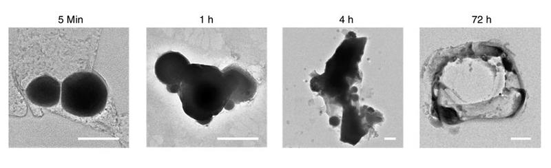 Illustration for article titled Diseñan nanorrobots de metal líquido capaces de detectar y destruir células cancerosas