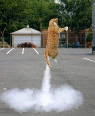 Illustration for article titled Cat farts ...