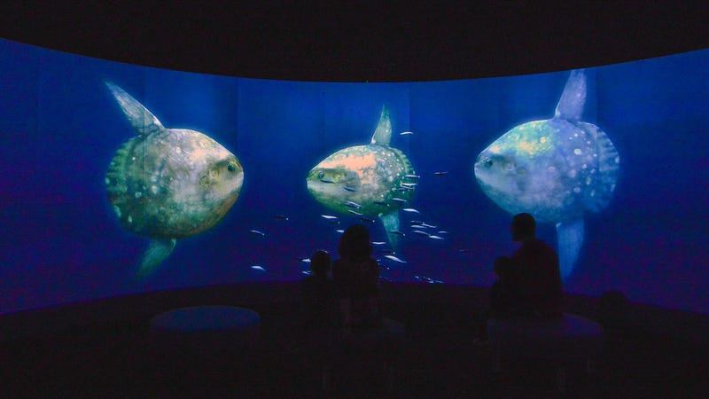 A scene from Unseen Oceans, a new exhibit at the American Museum of Natural History.