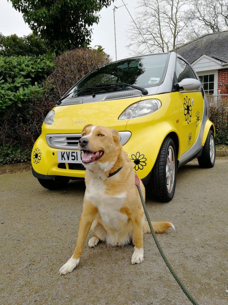 Illustration for article titled A Smart dog