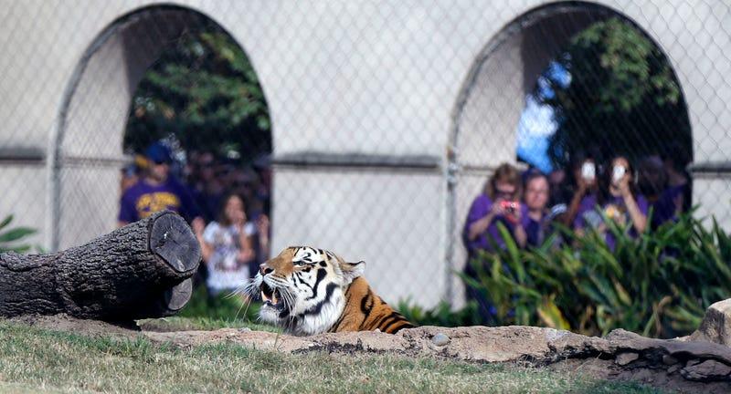 Photo via Gerald Herbert/AP
