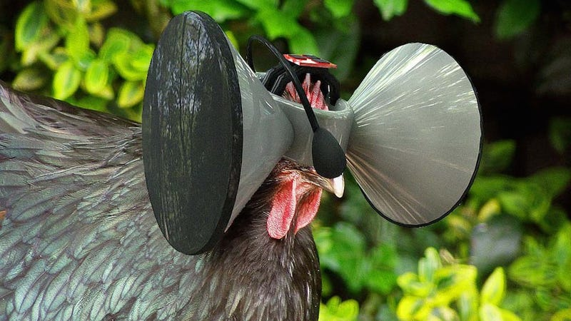 Illustration for article titled One Man's Insane Plan to Make Oculus Rifts for Chickens