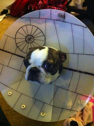 the death star makes everything cooler even a dog s cone of shame