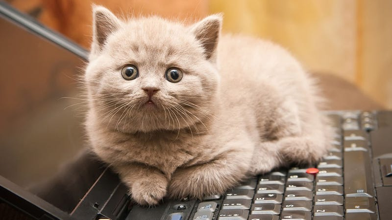 Illustration for article titled Why Cats Love Sitting on Keyboards