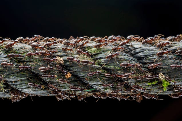 7 Nature Photo Winners That Show the Quiet Drama of Life