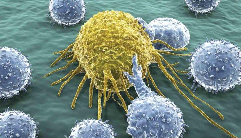 Interpretación artística de células del sistema inmune atacando una célula tumoral. Foto: Diamond Light Source UK)