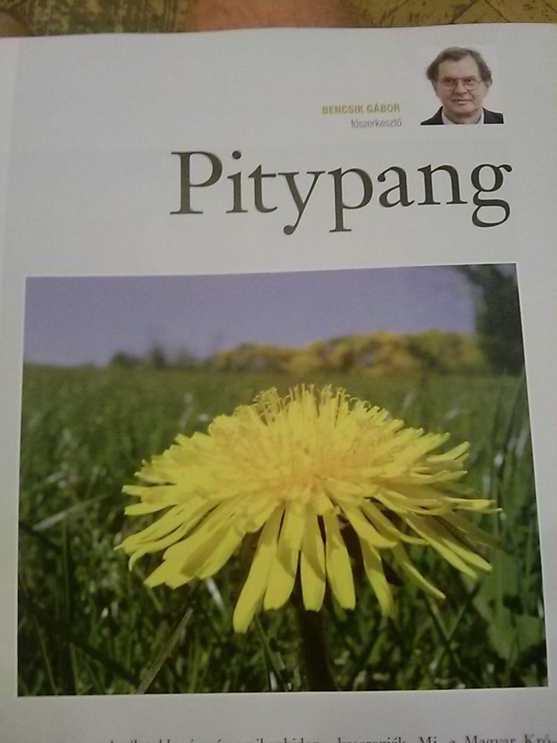 Illustration for article titled És tényleg pitypanggal indult útjára a Kerényi-féle Magyar Krónika!