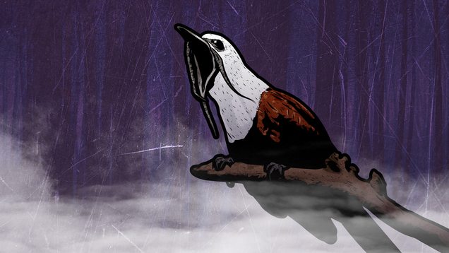 Spooky Shrieking Bird Looks and Sounds Like Something Out of a Horror Movie