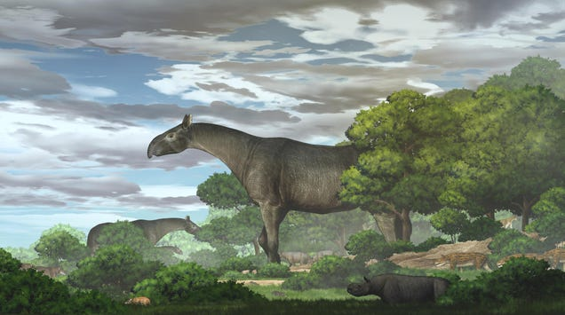 Newly Discovered Giant Rhino Fossil Defies the Imagination