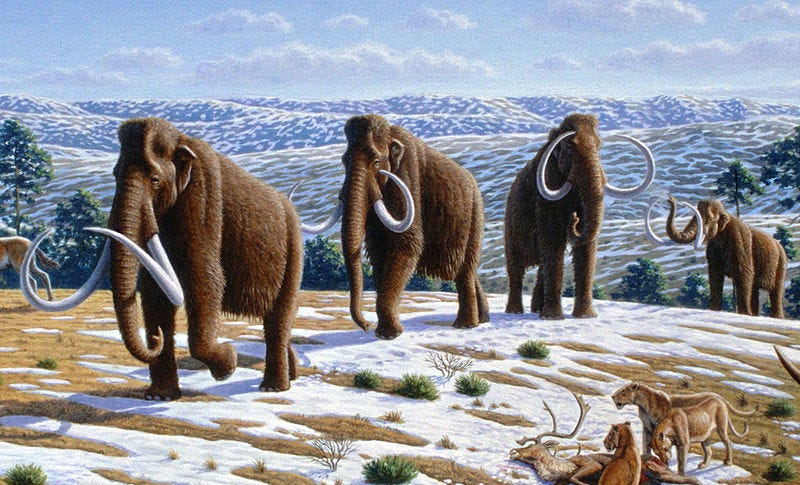 Illustration for article titled This Theory of Why Mammoths Went Extinct Will Make You See the Earth in a Different Way
