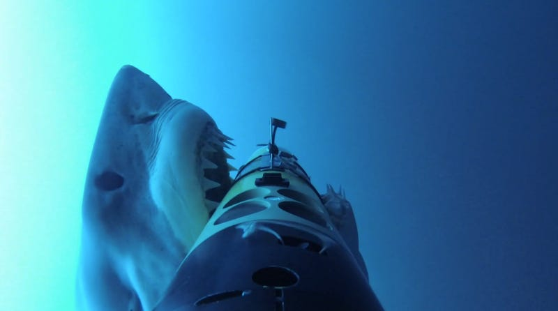 Illustration for article titled See What It's Like To Be Hunted By A Shark -- From the POV of a Seal