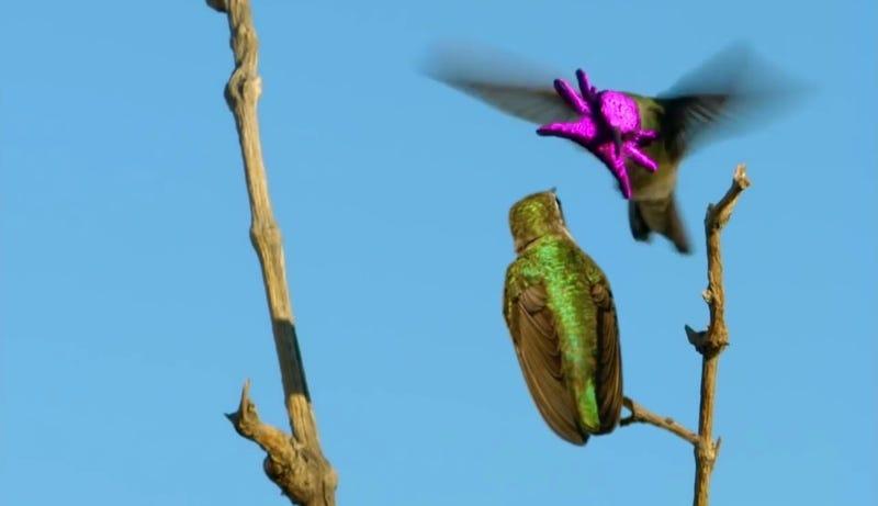 Imagen: Nature / PBS
