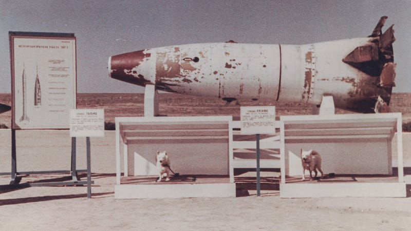 The head of a R-2A rocket and two space dogs on display after returning to Earth