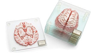 Illustration for article titled Learn About the Brain While Destroying Yours With These Drink Coasters