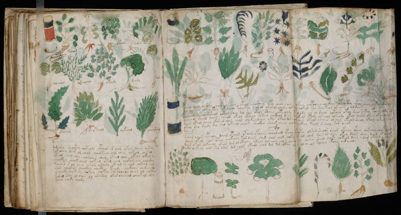 Illustration for article titled Have we found the key to the mysterious Voynich Manuscript code?