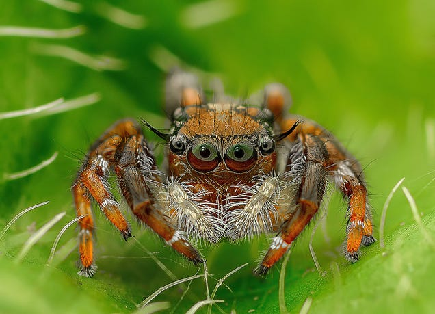 Is There Any Environment On Earth That Spiders Can't Live In?