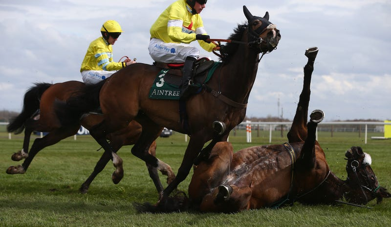 Curious Carlos falls at the last as Jack Sherwood (C) riding Ibis Du Rheu takes evasive action during the Alder Hey Children's Charity Handicap hurdle race at Aintree Racecourse on April 8, 2016 in Liverpool, England. Via Getty Images.