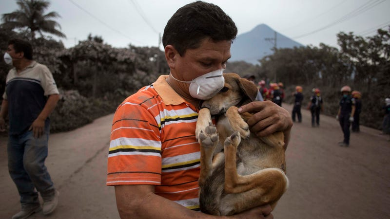 A resident cradles his dog after rescuing him in the wake of Fuego's eruption.