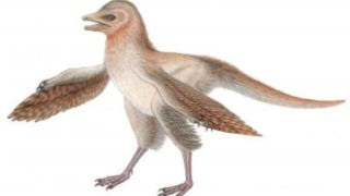 Illustration for article titled This little dinosaur had feathery wings 150 million years ago—but definitely couldn't fly