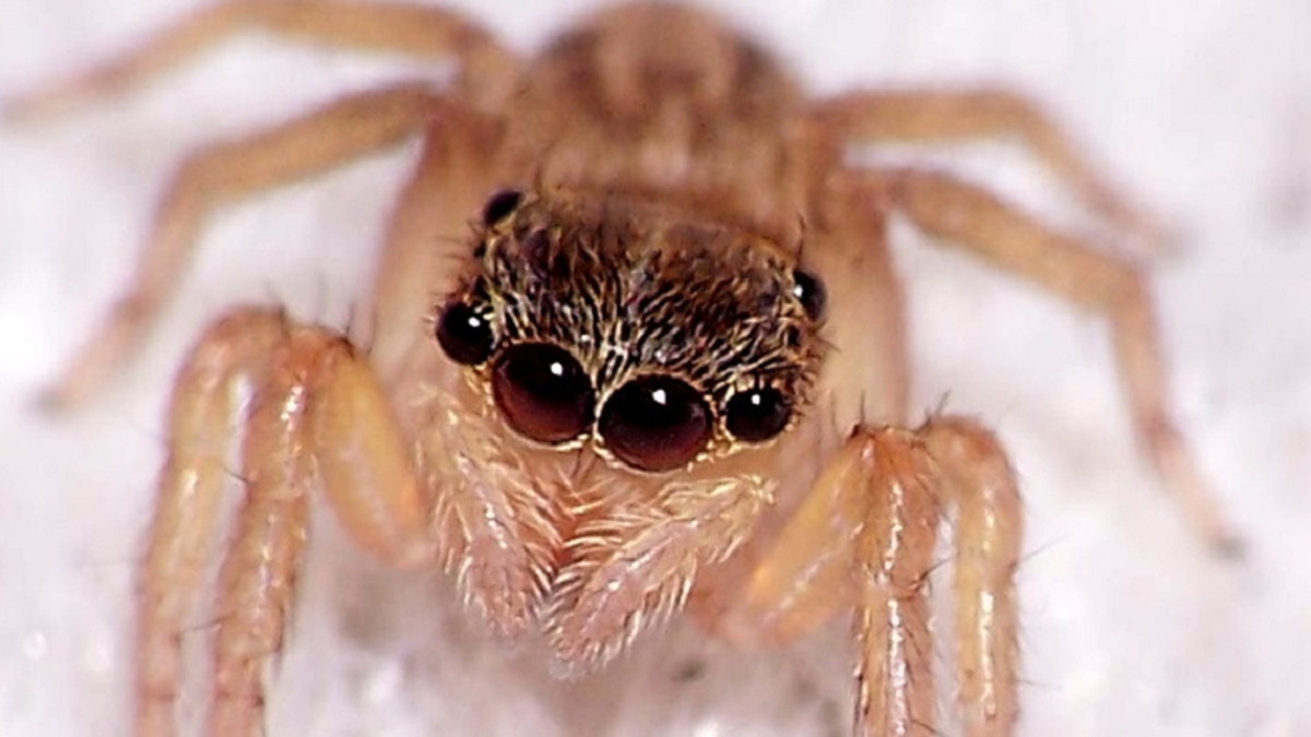 This Is How to Find the Spiders That Are Staring At You in