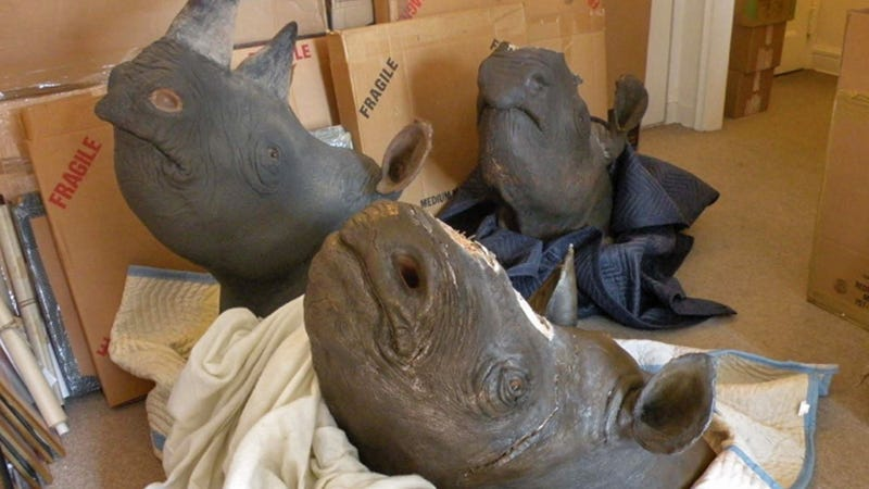 Illustration for article titled Humans Are the Worst: Western Black Rhinos Now Extinct