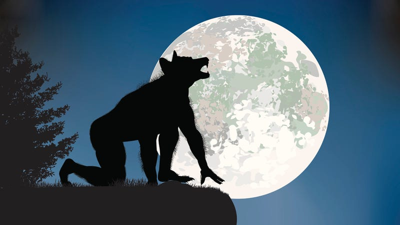 Illustration for article titled 5 Signs That The Werewolf You Turn Into During A Full Moon Is A Total Neat Freak