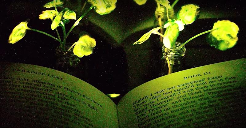 Illustration for article titled Regar las bombillas en lugar de cambiarlas: científicos del MIT logran que una planta doméstica emita luz