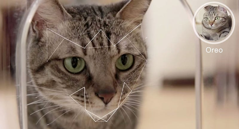 Illustration for article titled Bistro, el dispensador de comida perfecto para gatos gordos y rebeldes