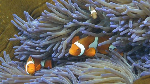 UN Says the Great Barrier Reef Is  In Danger,  Causing Australia to Have a Meltdown
