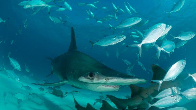 Shark Storm Not A Sharknadoits Not Even A Meteorological Event-6013