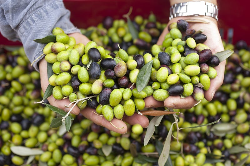 Illustration for article titled Counterfeiters Have Been Painting Expired Olives to Sell Them