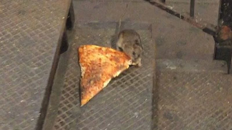 "Illustration for article titled Read This: An interview with the guy who ""discovered"" Pizza Rat"
