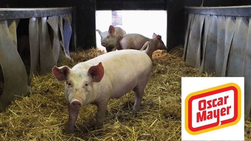 Illustration for article titled Animal Welfare FTW! Oscar Mayer Now Requires Pork Producers To Give Their Pigs One Thrilling Sexual Experience Before Sending Them To Slaughter