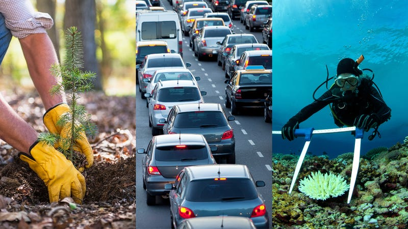 Illustration for article titled Report: Doing Your Part To Stop Climate Change Now Requires Planting 30,000 New Trees, Getting 40,000 Cars Off The Road, Reviving 20 Square Miles Of Coral Reef