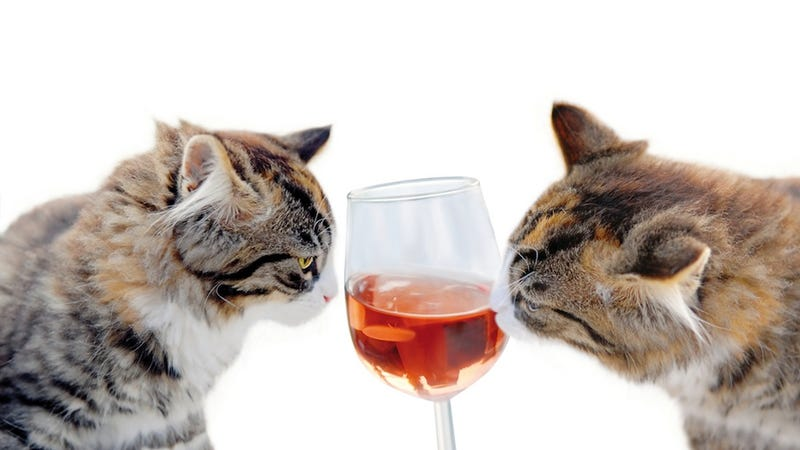 Illustration for article titled Wine For Cats: It Exists