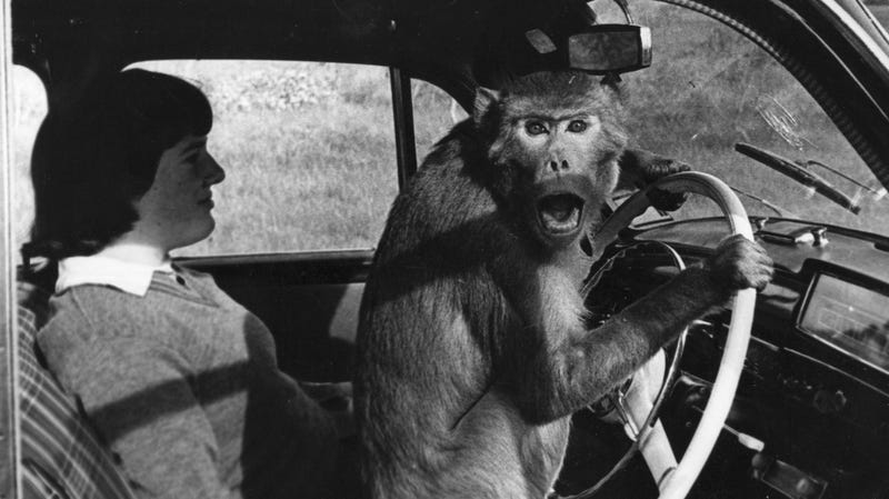 "A ""cheeky chauffeur."" Get it? Monkeys don't drive! Hilarious!"