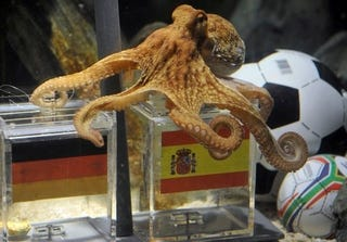 Illustration for article titled World Cup-Predicting Octopus Is Right, And German Fans Want Him Dead