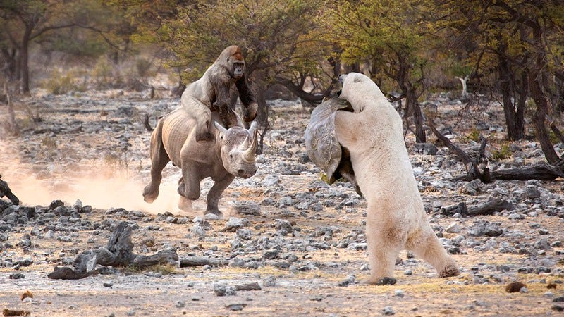A Silverback Gorilla Riding A White Rhino Into Battle Against A Polar Bear Using A Galápagos Tortoise As A Shield Is Not Possible