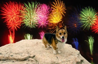Illustration for article titled How to Keep Your Dog Happy When Fireworks Go Off—Using Science!
