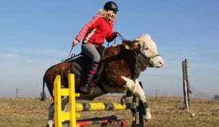 Illustration for article titled There's A Teenage German Girl Who Rides Cows Like They're Horses
