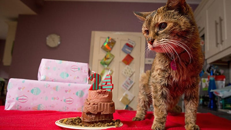 Illustration for article titled The World's Oldest Cat Is 24 and Named Poppy